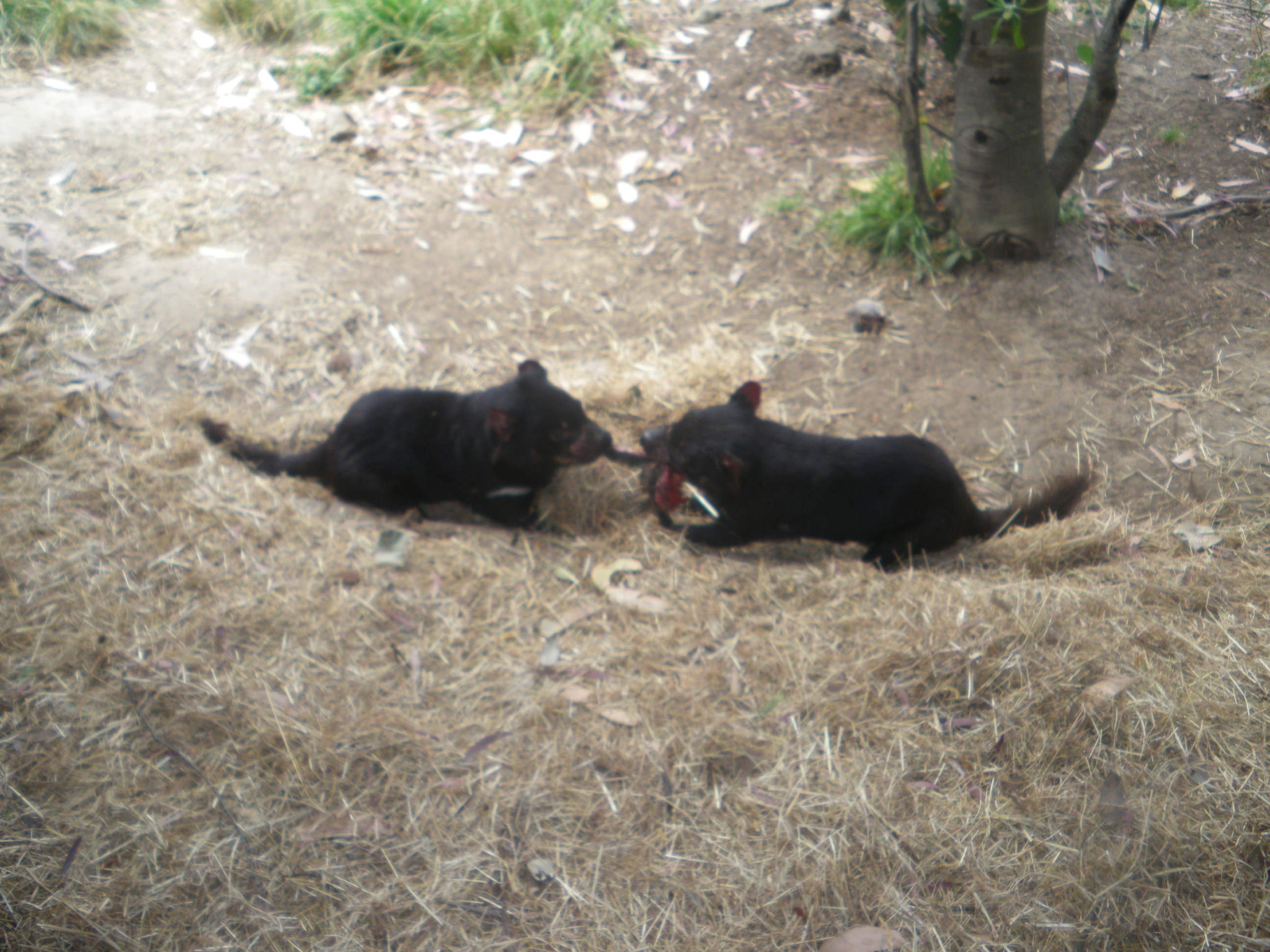 Jonny Blair of Don't Stop Living visits Tasmanian Devil centre