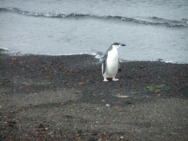 Jonny Blair in Antarctica - swimming naked at deception island