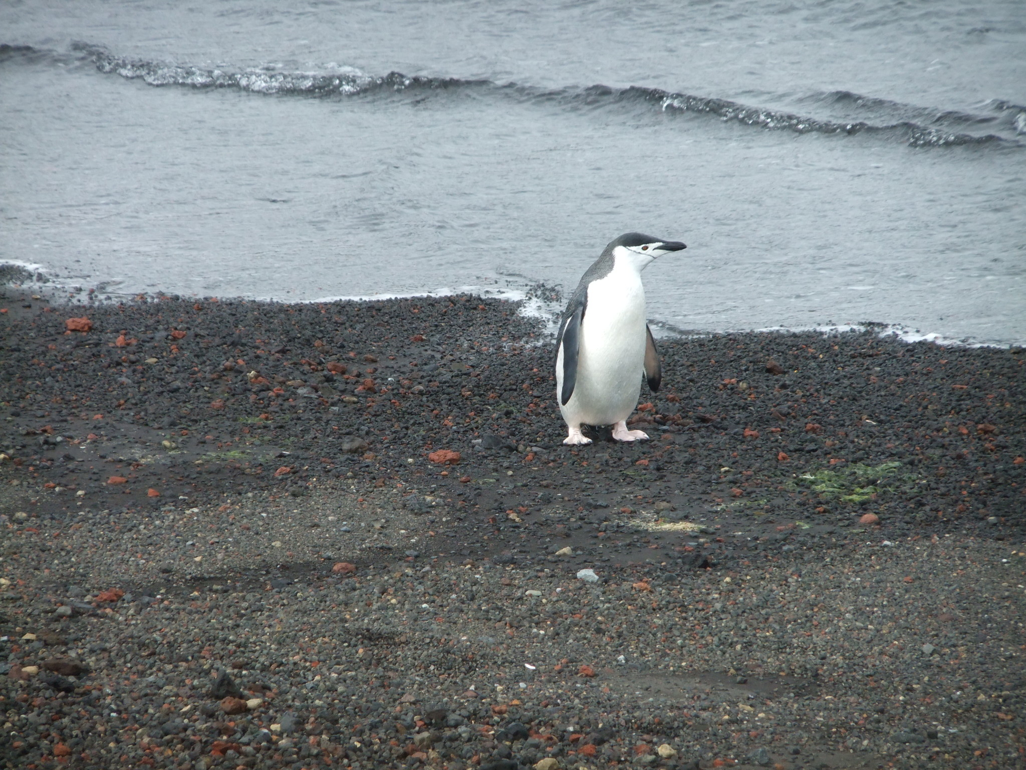 On Antarctica Naked and Other Stories