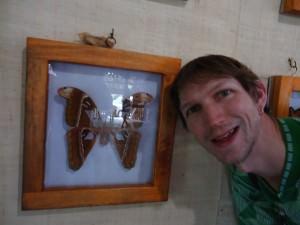 world's largest moth