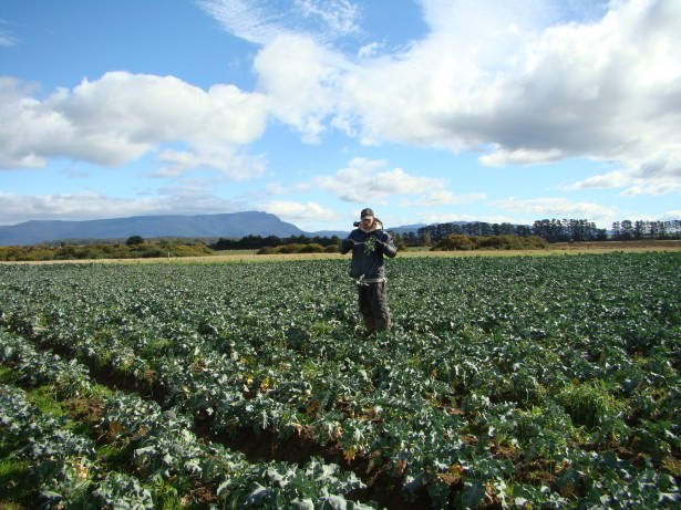 Jonny Blair working on a broccoli farm near Poatina in Tasmania before booking his Antarctica trip