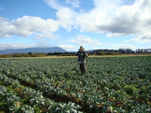 Jonny Blair working on a broccoli farm near Poatina in Tasmania before booking his Antarctica trip