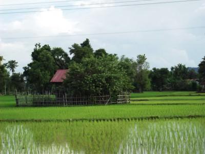 don det rice fields