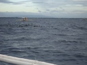 dolphin watching in Panglao with Dont Stop Living