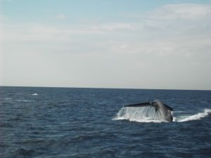 Jonny Blair at Don't Stop Living heads whale watching in Sri Lanka