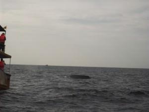 Jonny Blair watching whales in Mirissa