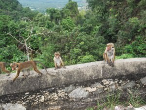 Jonny Blair saw monkeys relaxing near the Samade Meditation Buddha Statue overlooking Kurunegala in Sri Lanka