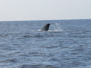 Jonny Blair takes dont stop living whale watching in Sri Lanka