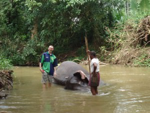 bathing with elephants in Pinnawala