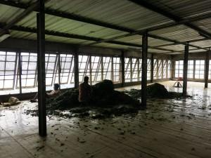 Dambateene Tea Factory upstairs