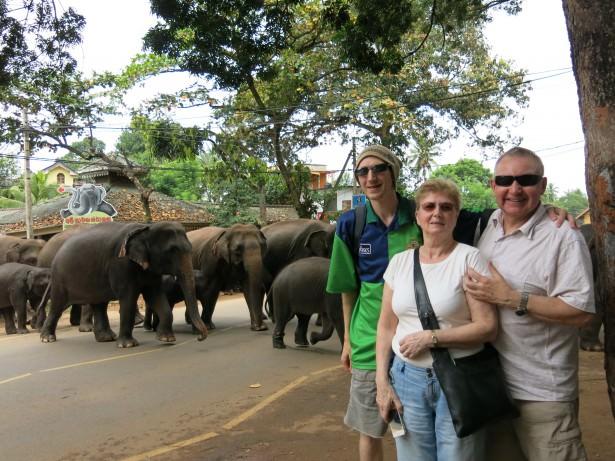 Elephant parade in PInnawala in Sri Lanka