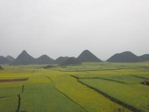 yellow fields luoping yunnan