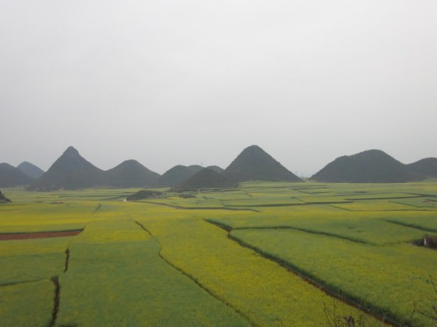 yellow fields luoping yunnan