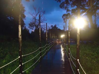 Walking to watch fireflies in Borneo