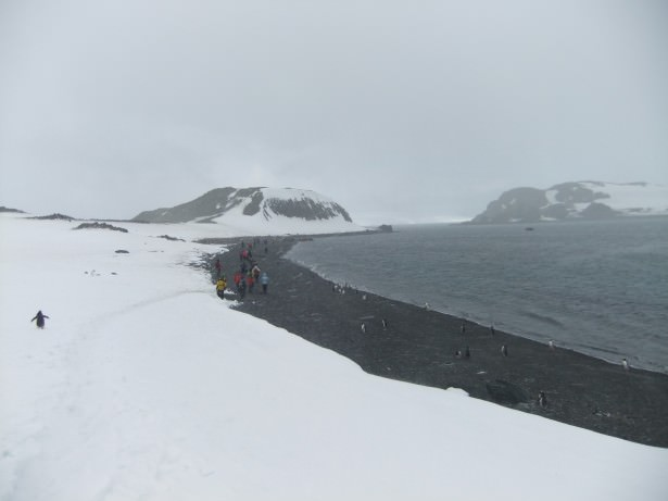 Barrientos Island, Antarctica