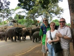 live elephant parade in Pinnewala Sri Lanka