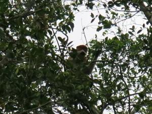 Monkeys in Borneo by Jonny Blair of Don't Stop Living