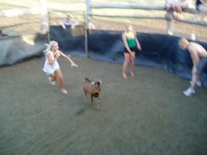 goat rodeo