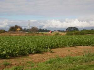 weeding in Bishopsbourne Tasmania