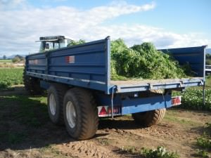 trailers of weeds in tasmania