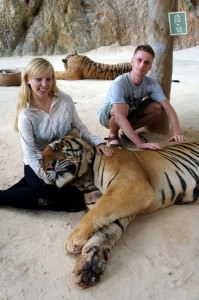 tigers in thailand