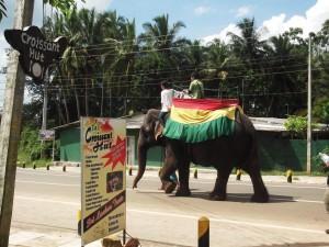 sigiriya lion rock elephant