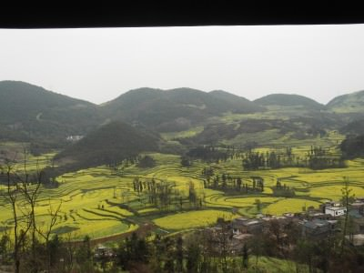 view of rapeseed fields in china