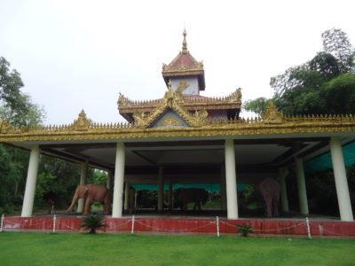 yangon myanmar pink elephants