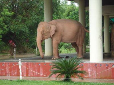 pink elephant yangon myanmar