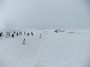 jougla point antarctica