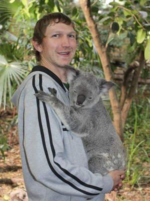 koala in lone pine