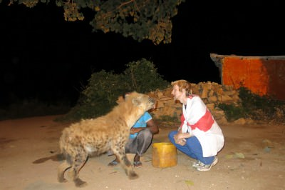 mouth to mouth hyena feeding in harar ethiopia