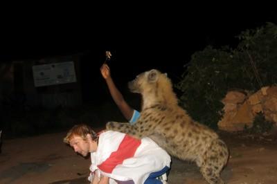 hyena jumping in Harar Ethiopia