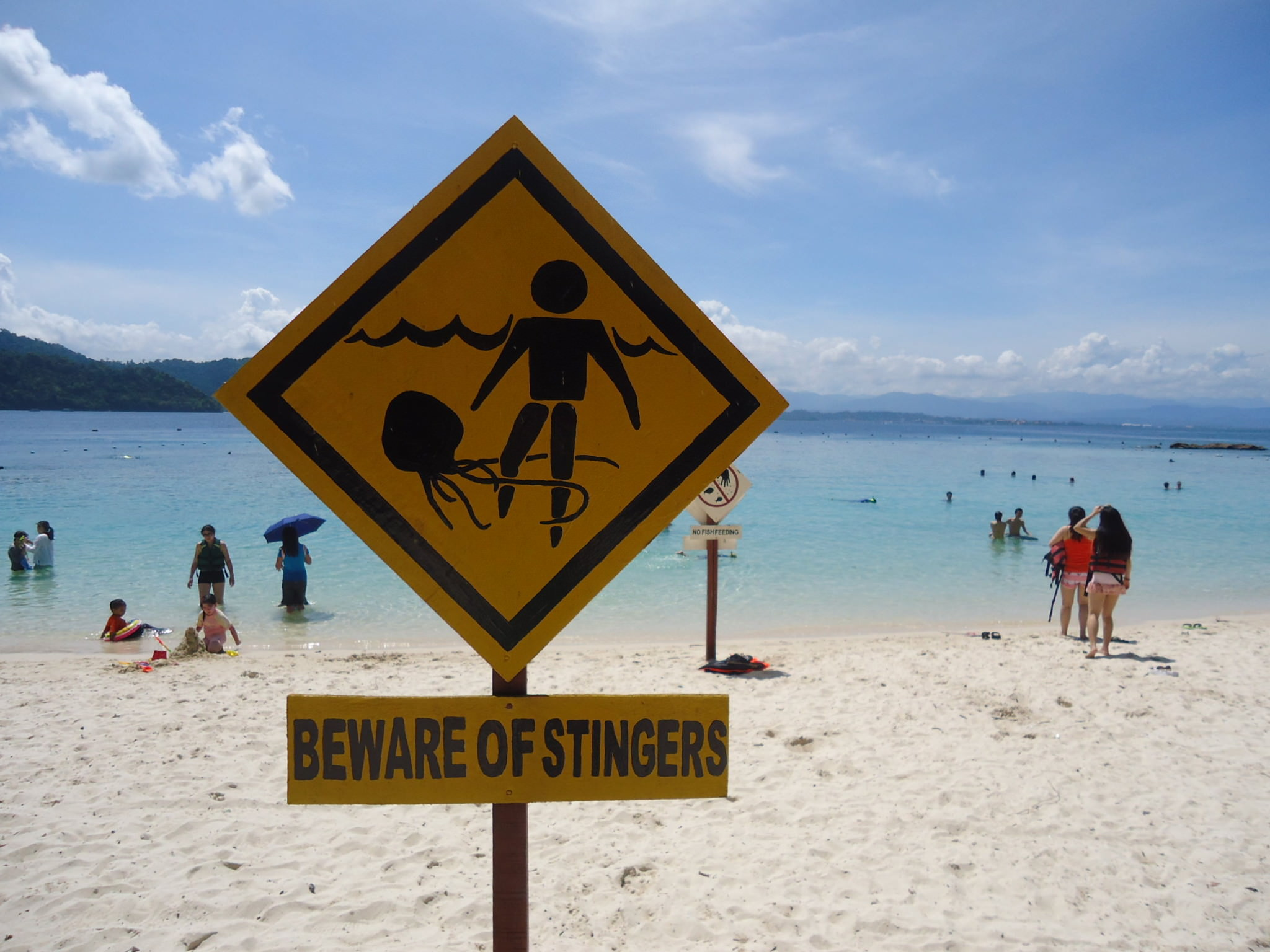 malaysia sapi island jellyfish