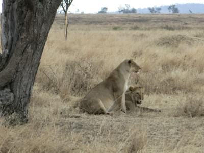 Animal Spotting at the Serengeti National Park