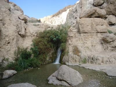 ein gedi desert oasis israel