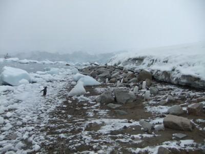 beach at neko harbour antarctica