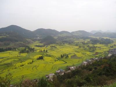 Springtime at Luoping, Yunnan, China.