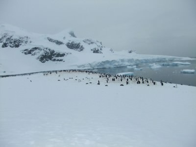 best antarctic islands