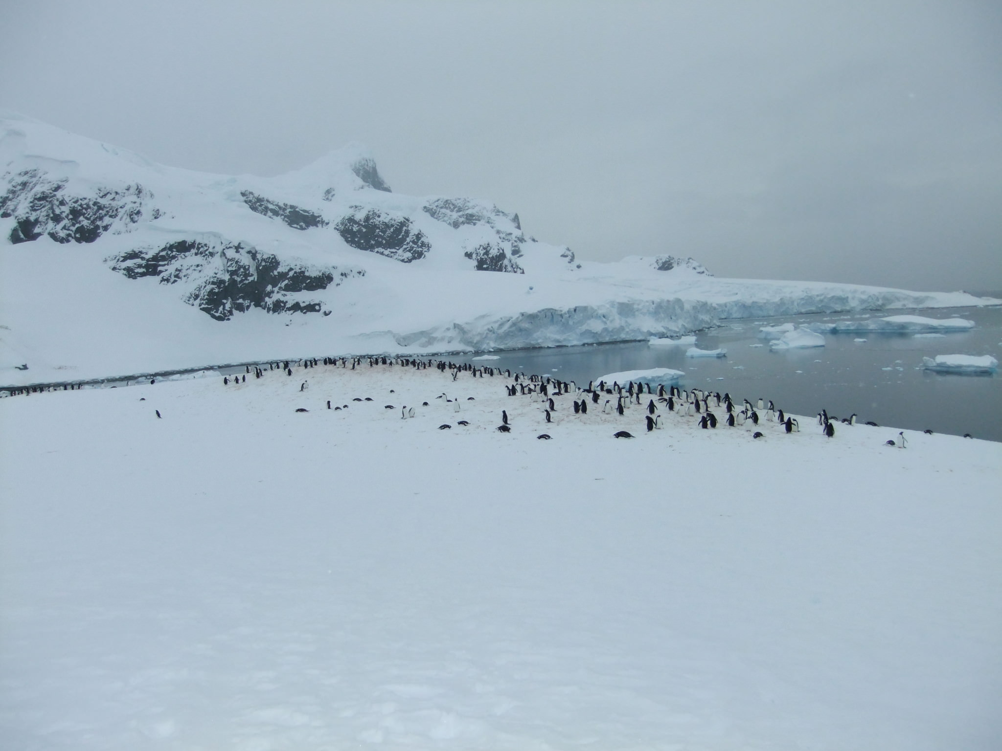 best antarctic islands