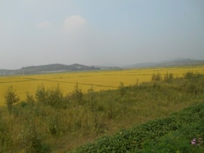 jongiu korea