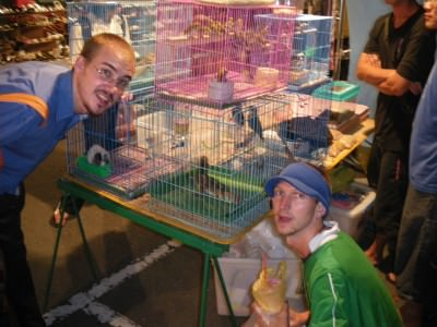 Animals at the night market in Xinying Taiwan