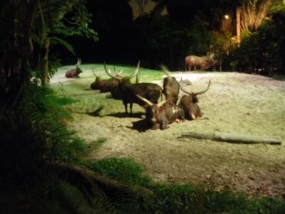 Night Safari in Singapore