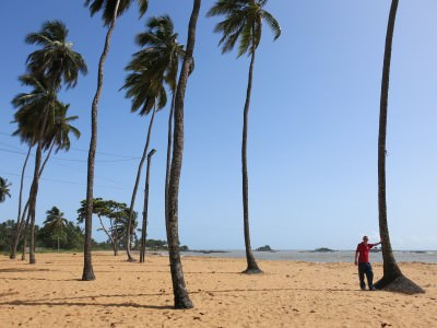 Relaxing by the palm trees on the golden sands of the Novotel beach, French Guyana.