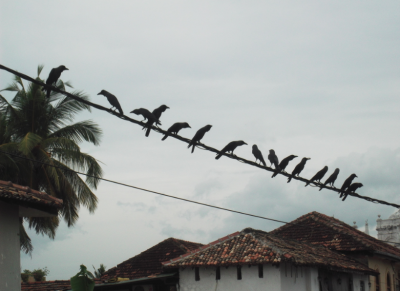 Backpacking in Galle - Blackbirds on a Wire