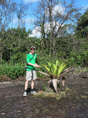 kaieteur mosquito plant