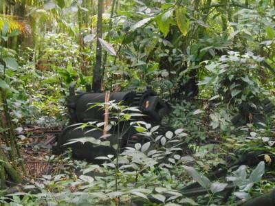 Sugar Cane Plantations in Suriname - cool tour!