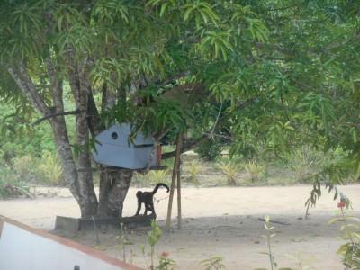 A monkey on Sloth Island.