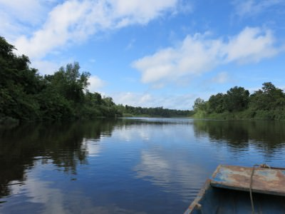 On a sugar cane trail in Suriname