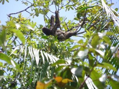 Sloth Island tour - sloths